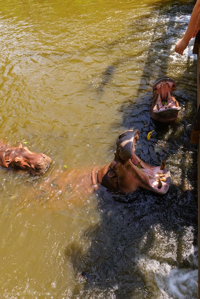 Фотография 4. Стоит ли ехать на экскурсию в зоопарк «Кхао Кхео»? Если любите животных, то, конечно, да! Отзывы об отдыхе в Паттайе самостоятельно. 1/500, -0.33, 9.0, 900, 24.