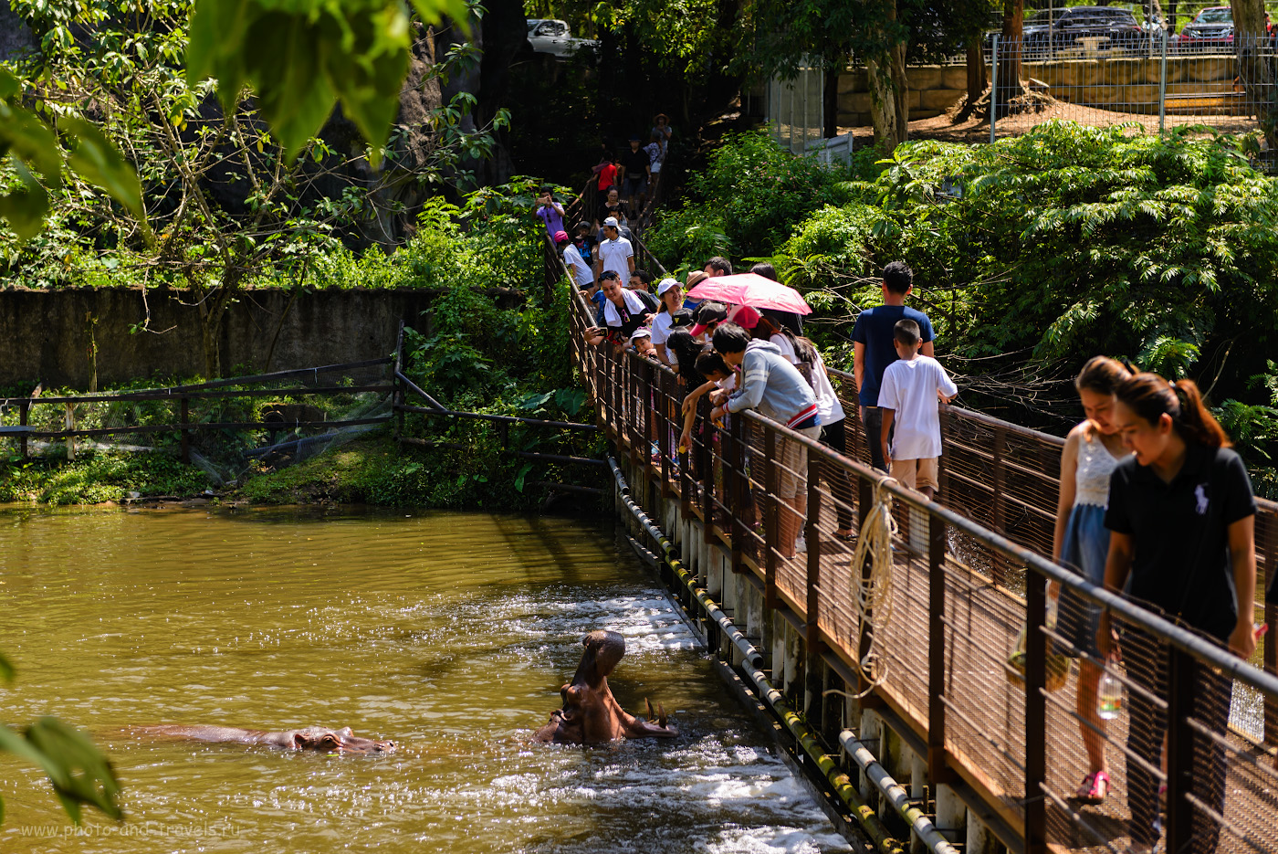 Фотография 2. Посетители кормят бегемотов в Khao Kheow Open Zoo. Отзывы туристов об экскурсиях в Паттайе. Отчет о самостоятельном отдыхе в Таиланде. Фотоаппарат Nikon D610 + Nikon 24-70mm f/2.8G. Параметры: 1/500, 3.5, 110, 70.