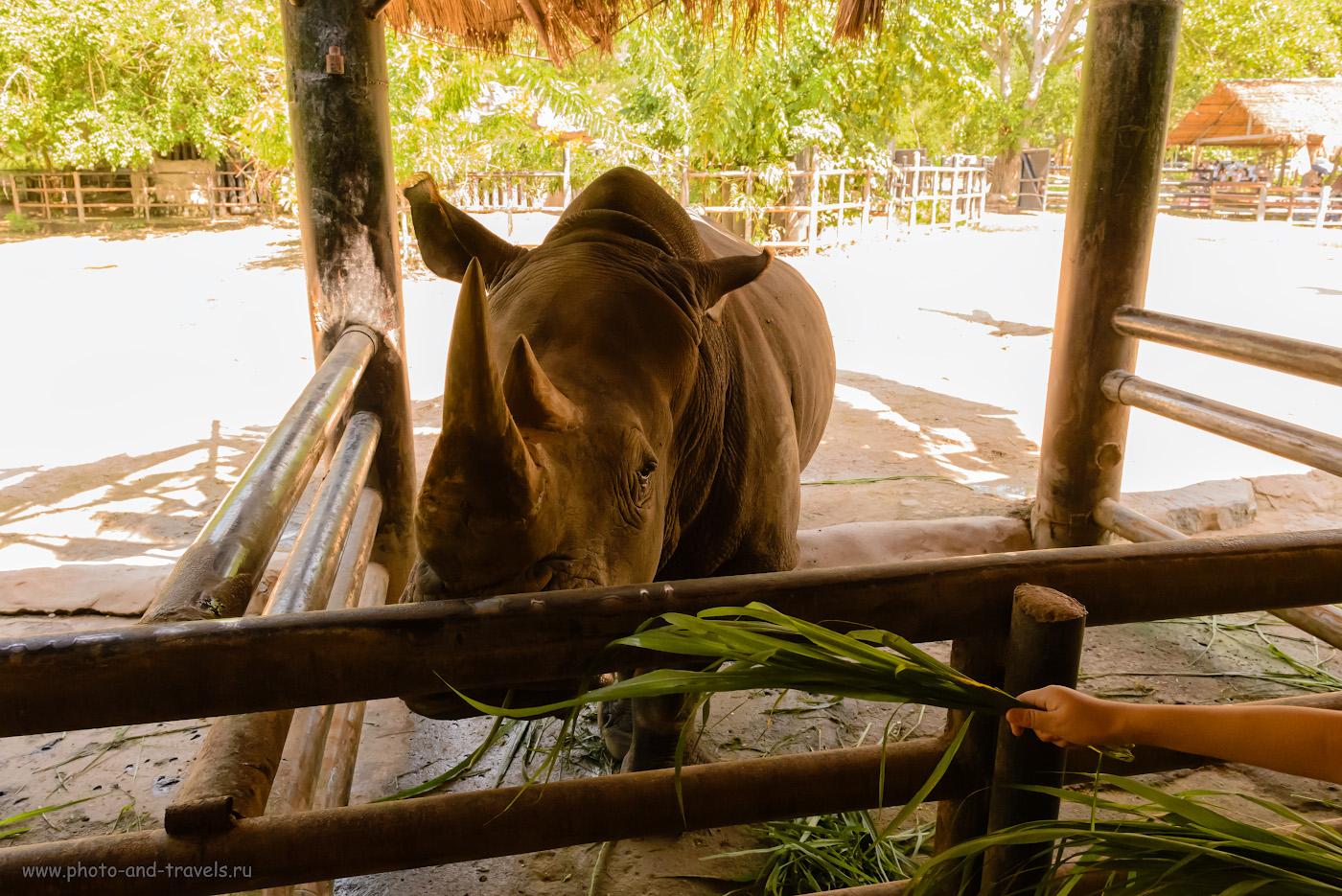 Фотография 12. Белый носорог в зоопарке «Кхао Кхео». Сколько радости подарит ребенку общение с животными! 1/500, +0.67, 9.0, 5600, 24.