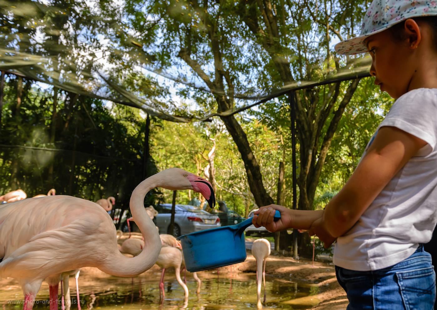 Фото 13. Детям будет особенно интересно в зоопарке «Кхао Кхео». Ведь здесь можно покормить и зверей, и птиц, и рептилий. Отчет о самостоятельной экскурсии из Паттайи.  1/500, +0.67, 4.0, 800, 24.