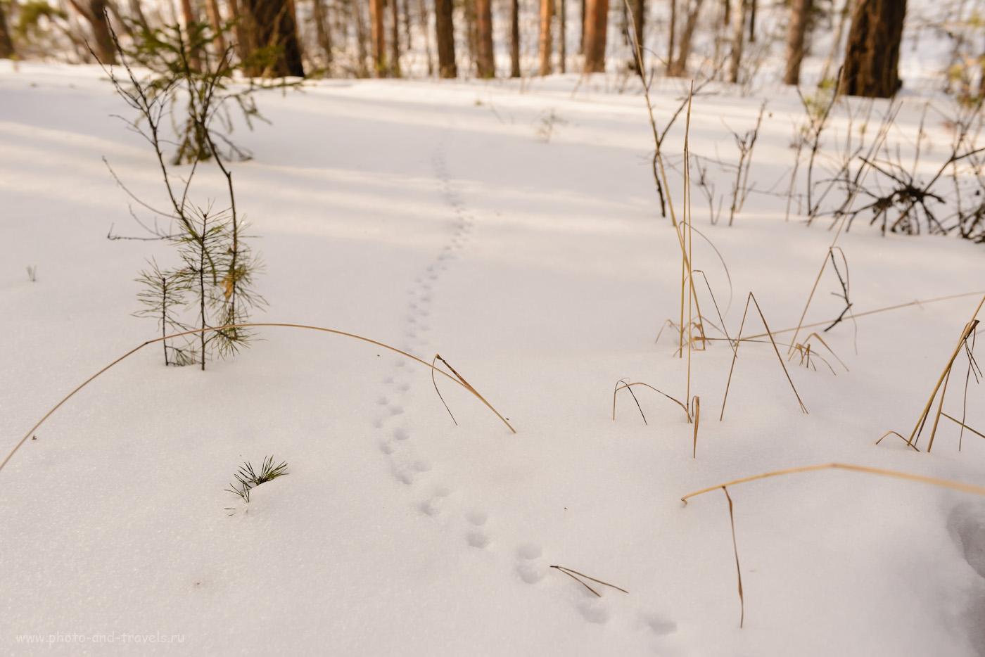 Фото 9. Изучаем фауну на горе Шайтан-камень в Режевском районе Свердловской области. 1/80, +0.67, 6.3, 220, 35.