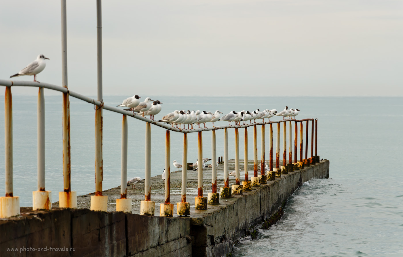 Снимок 3. Голодные чайки на волнорезах в Сочи. Утром на море в марте. 1/320, f/5.6, ISO 100, 135мм.