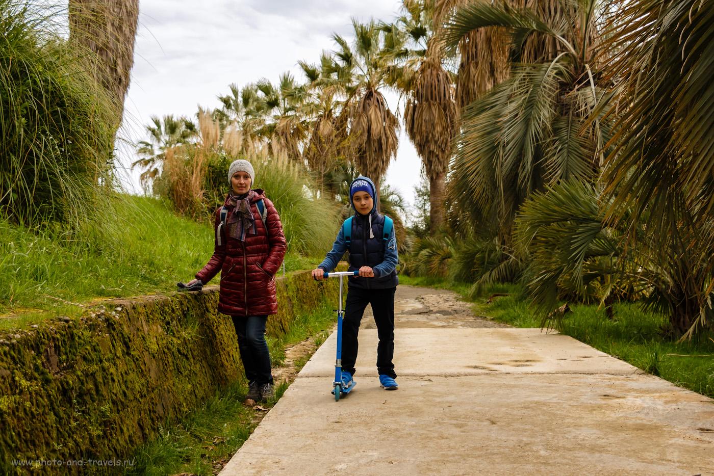 Фото 11. Прогулка по вечнозелёному дендрарию. Что посмотреть в Сочи в марте. 1/320, f/4, ISO 200, 29мм