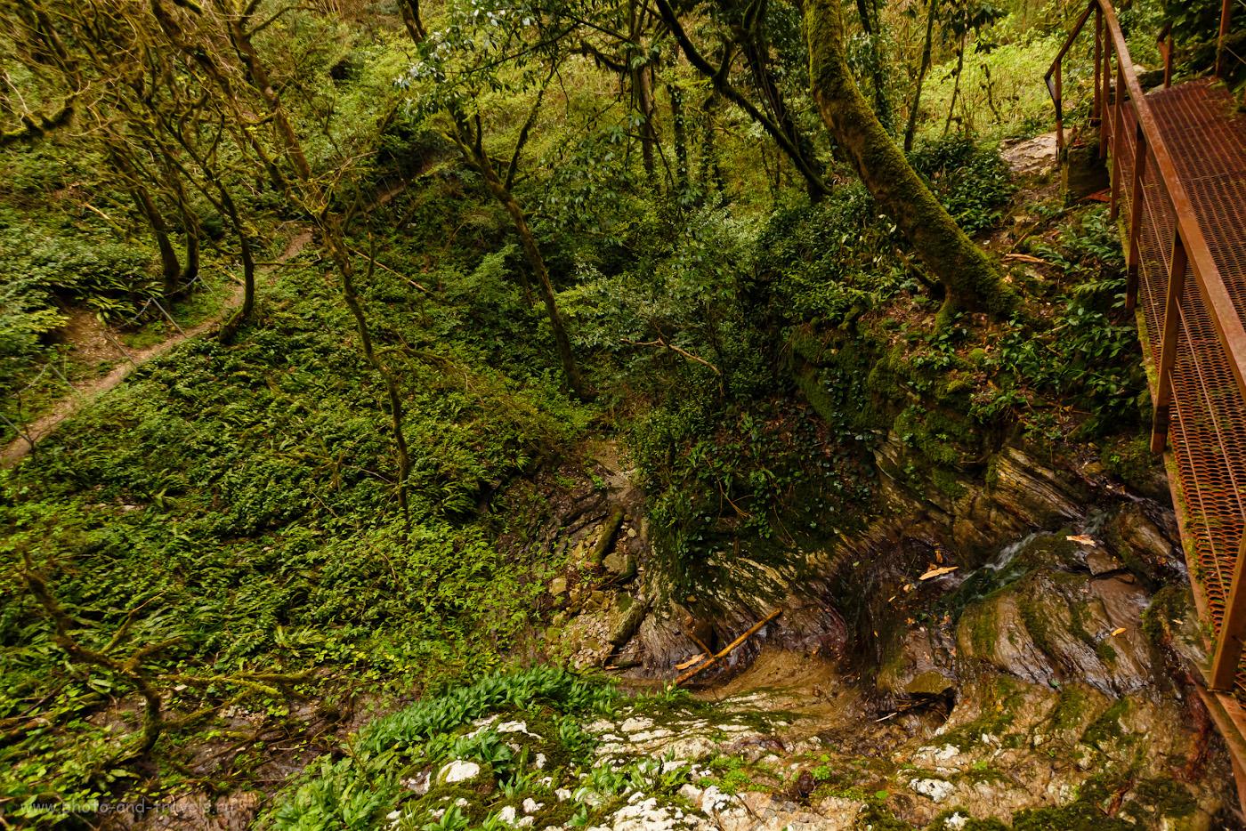 Снимок 34. Виды на маршруте «Большое кольцо» в Тисо-самшитовой роще. Рассказы туристов о поездке в Сочи весной. 1/20, f/4, ISO 400, 10.