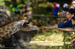 Park Nong-Nuch zamechatelnoe mesto Ono mne nravitsia tem chto mozhno posmotret i floru i faunu Liubiteliam zhivotnykh sovetuiu eshche posetit otkrytyi zoopark Kkhao-Kkheo