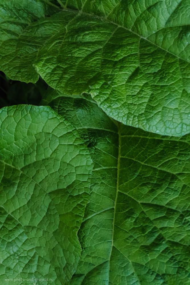 Фото 30. Обыкновенный лопух. Съемка растений на Sony A6000 KIT 16-50mm f/3.5-5.6. Настройки: 1/50, +0.7, 5.6, 3200, 40.