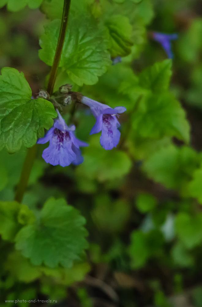 Фотография 31. Снимаем цветы на беззеркальный фотоаппарат. 1/50, +0.7, 5.6, 3200, 41.