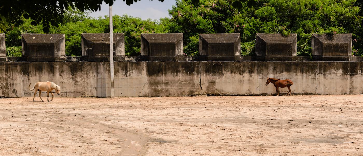 Фотография 8. На территории Храма Истины можно покататься на двуколке, запряженной лошадьми. Когда туристов нет, кони отдыхают в загоне. 1/400, +0.33, 8.0, 100, 48.
