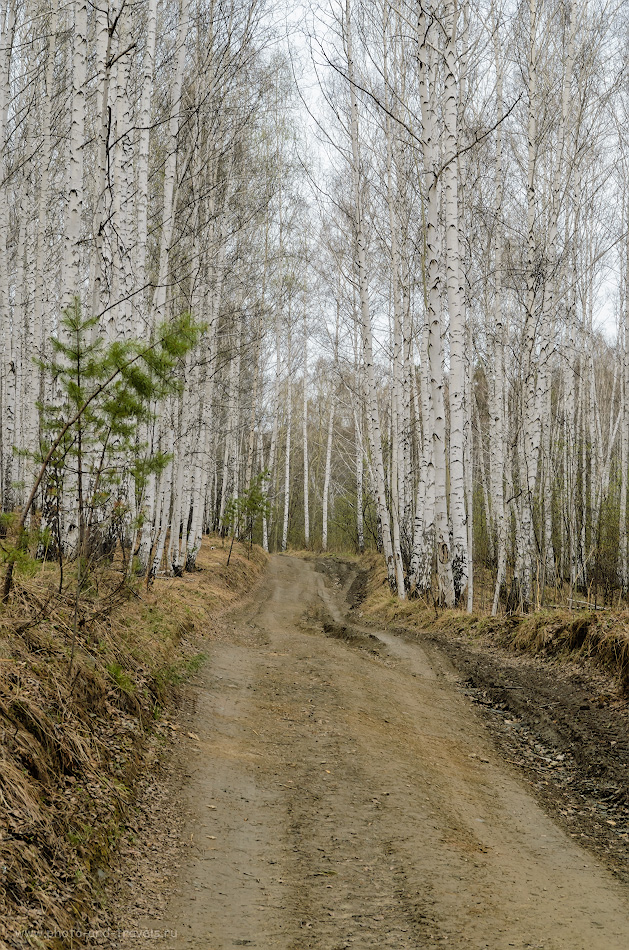 9. На этом месте должна быть фотография горы Аракульский Шихан... Но мы не нашли ее... :) Только два часа прогулялись по такому лесу в Челябинской области и ни с чем вернулись домой. Снято на Nikon D5100 + Nikon 17-55mm f/2.8G. Настройки: 1/125, 9.0, 320, 48.