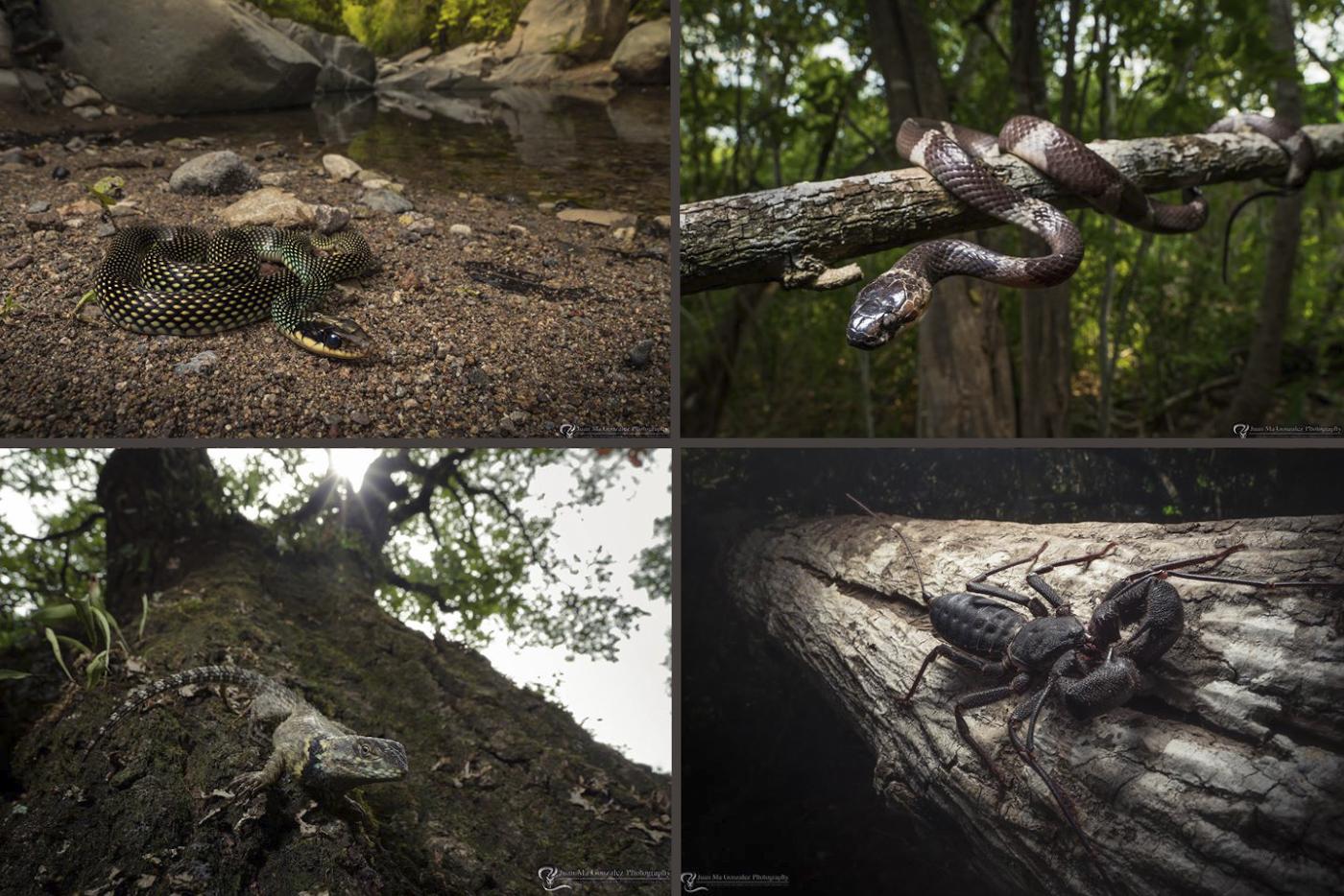 Фото 22. Макрообъектив Laowa 15mm f4 1:1 Macro для съемки рептилий, насекомых и других мелких животных.