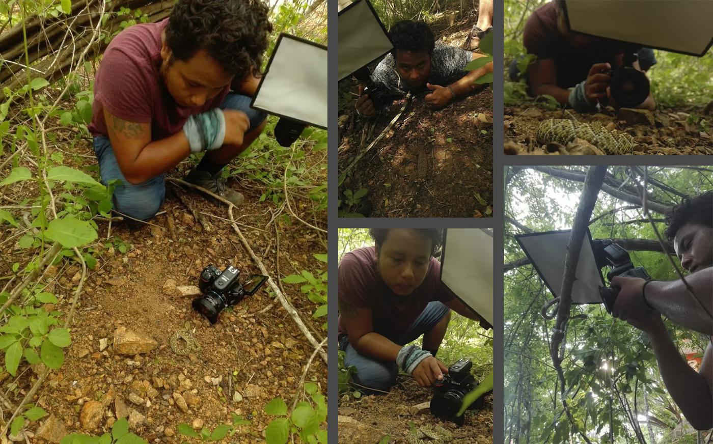 Фото 23. Как происходит фотоохота на змей с макрообъективом Laowa 15mm f4 1:1 Macro. Тушка Nikon D5600 + радиосинхронизатор + внешняя вспышка.