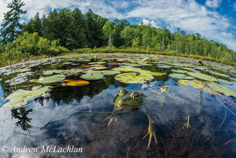 13. Пример фотосъемки на фишай Sigma 15mm Fisheye и полный кадр Nikon D800. Фотоохота в болоте. Настройки: ISO 400, f16 @ 1/200 sec.