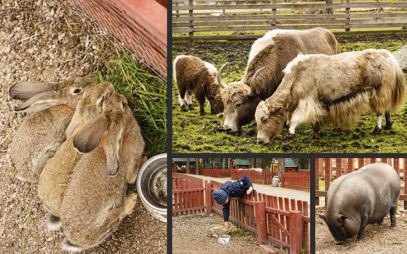 Фото 41. Зоопарк в Бурабае. Отзывы о поездке на отдых на озеро Боровое. Автомобильное путешествие из России в Казахстан.