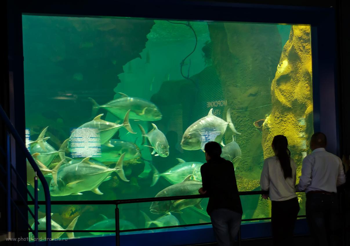 Фото 41. Аквариум с тунцами в океанариуме Астаны. Камера Canon 650D. Объектив Yongnuo YN 50mm f/1,8 II. Параметры съемки: 1/20, -0.3, 1.8, 800, 50.