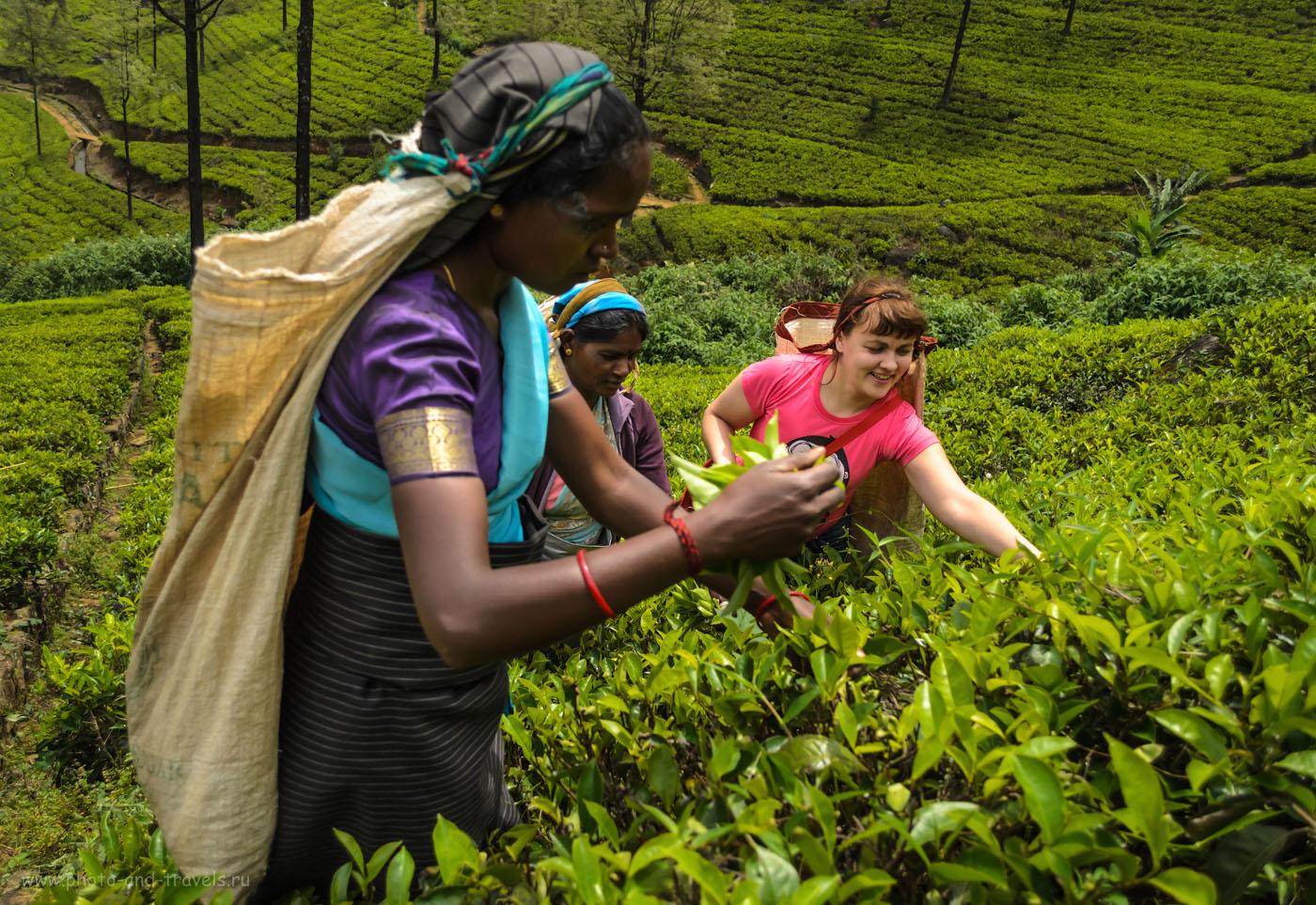 9. Интересные экскурсии на Шри-Ланке. Если нет денег на фотосессию со сборщицами чая, придется отработать... Чайная плантация Mackwoods Labookellie в окрестностях Нувара Элия.