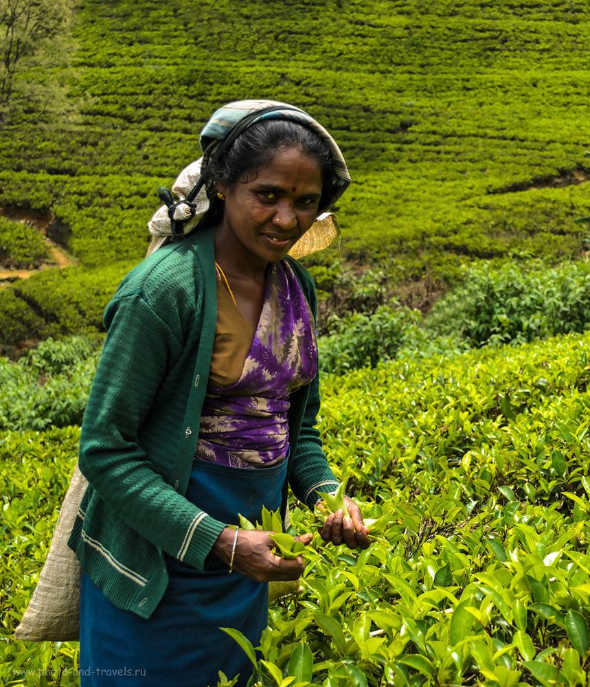8. Отзыв о поездке на чайную плантацию Mackwoods Labookellie из Nuwara Elya самостоятельно. Две недели по Шри-Ланке за рулем арендованного автомобиля