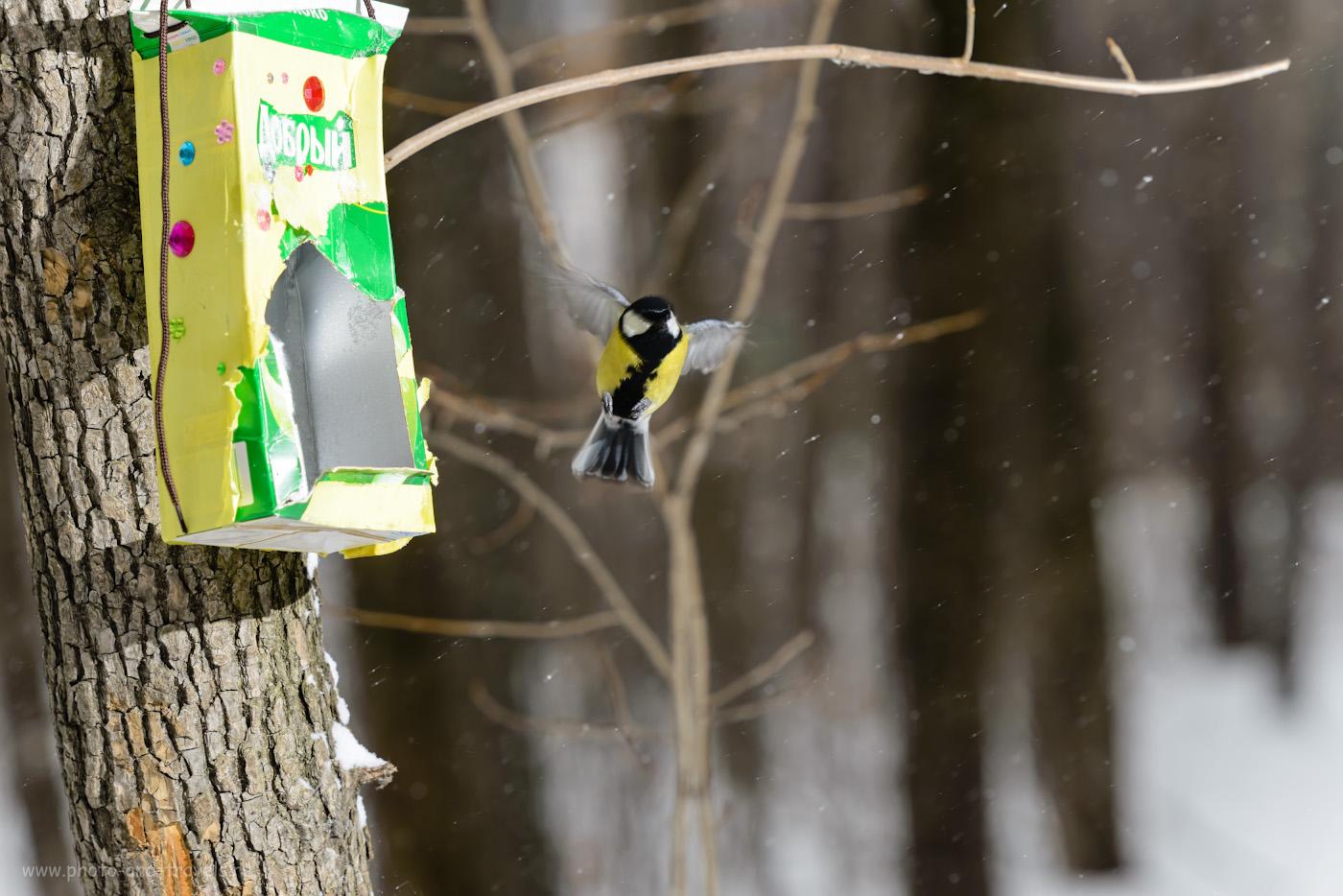 Фотография 8. Пробуем снимать птиц в полете, освещая их внешней вспышкой Yongnuo YN-685N. Камера Никон 70-200/2.8 и телеконвертер Никон TC-14E2. Управление от контроллера Yongnuo YN-622N-TX. Настройки: 1/200, 6.3, 100, 210.