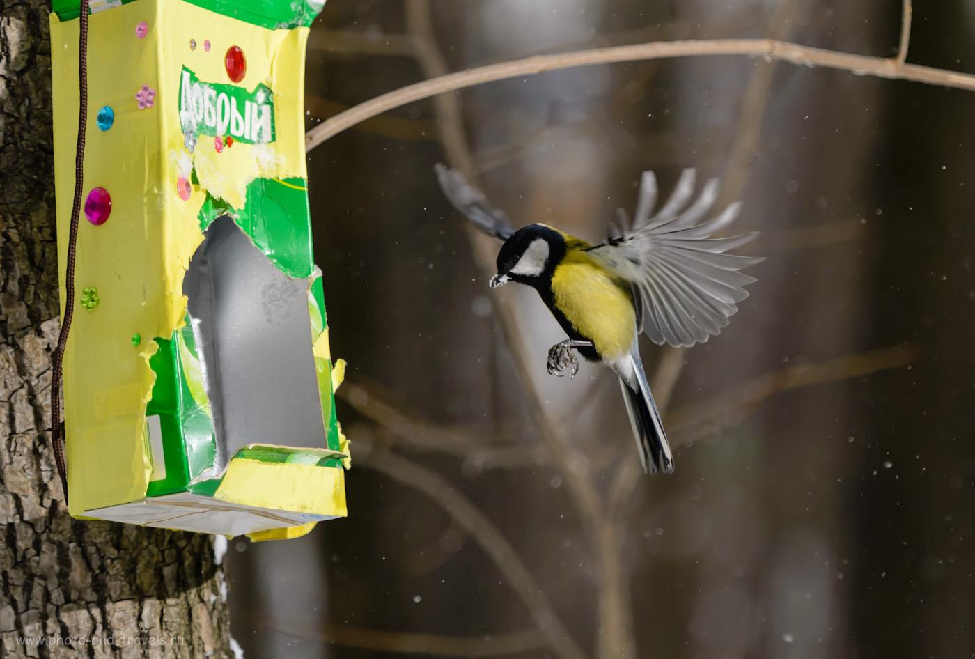 Фотография 9. Для выравнивания освещенности птицы и фона при фотоохоте со вспышкой приходится повышать ИСО. Настройки: 1/2000, 4.0, 500, 160.