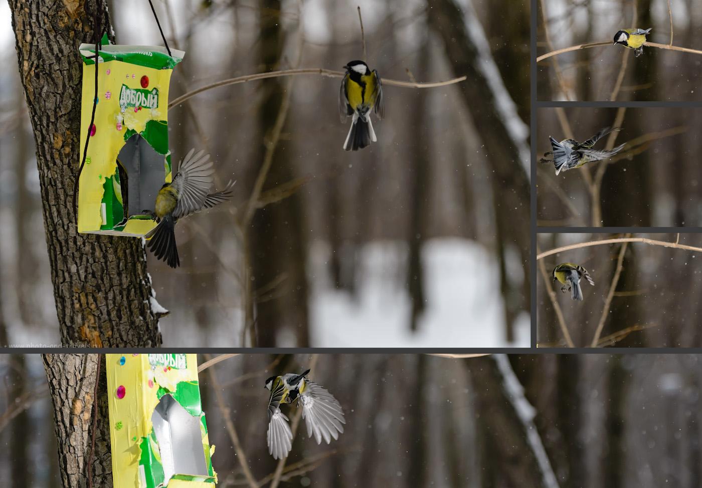 Фотография 15. Трудности правильно сфокусироваться при фотоохоте на птиц в полете.