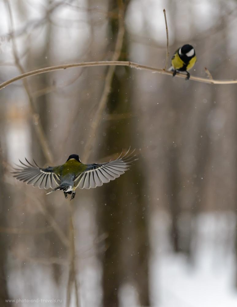 Фотография 10. Снимаем птиц в полете, освещая их внешней вспышкой. Основы фотоохоты для новичков-фотолюбителей. Настройки: 1/2000, 4.0, 500, 155.