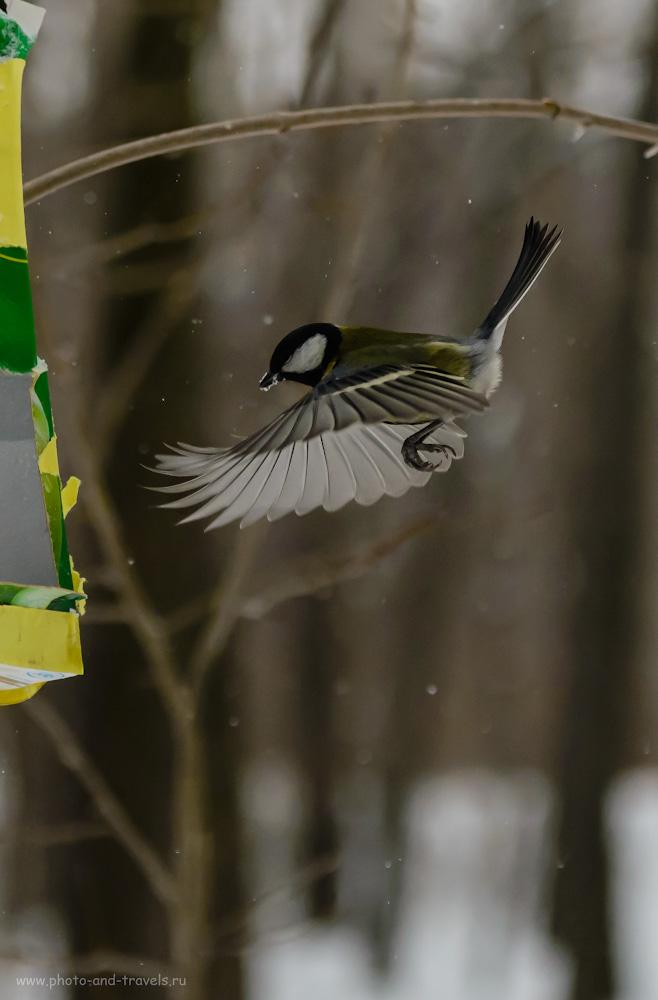Фотография 17. Фотоохота на птиц в пасмурный день без вспышки. 1/4000, 4.0, 1600, 100.
