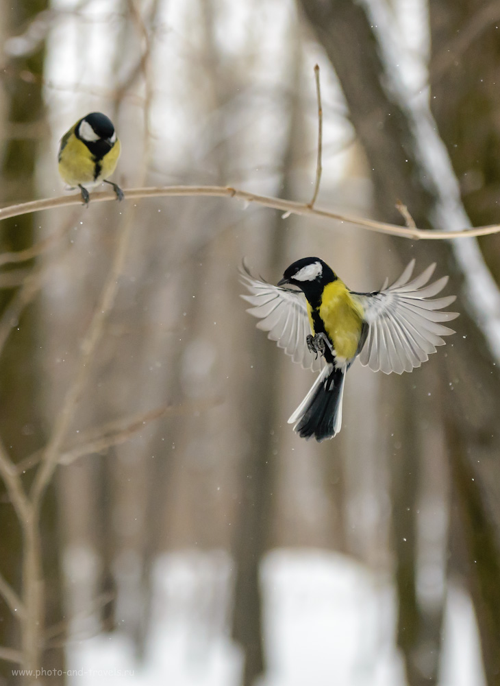 Фотография 19. Как я устроил фотоохоту на птиц в парке. 1/4000, 4.0, 1600, 100.