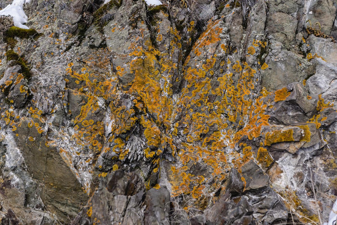 Фото 18. Лишайники у Ольгинского водопада. 1/160, -0.67, 4.5, 180, 70.