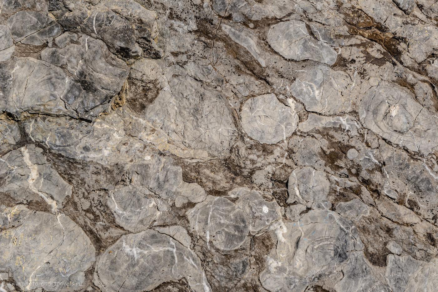 Фотография 30. Окаменелые ракушки в скале Зотинской пещеры. 1/160, +0.67, 6.3, 100, 60.