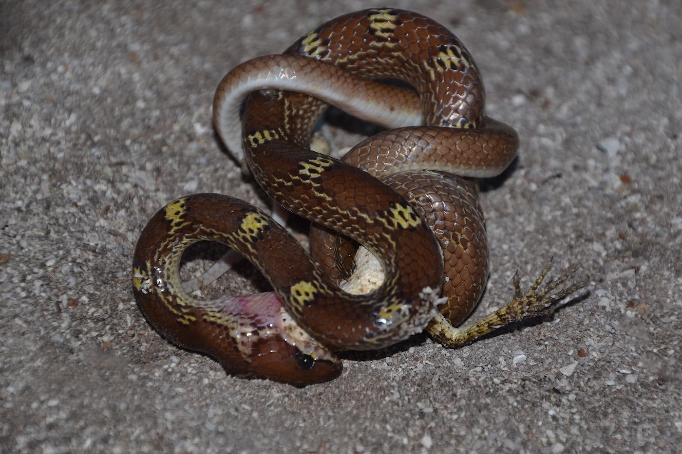 какие змеи обитают на мальдивах фото приезжает отдохнуть, кто-то