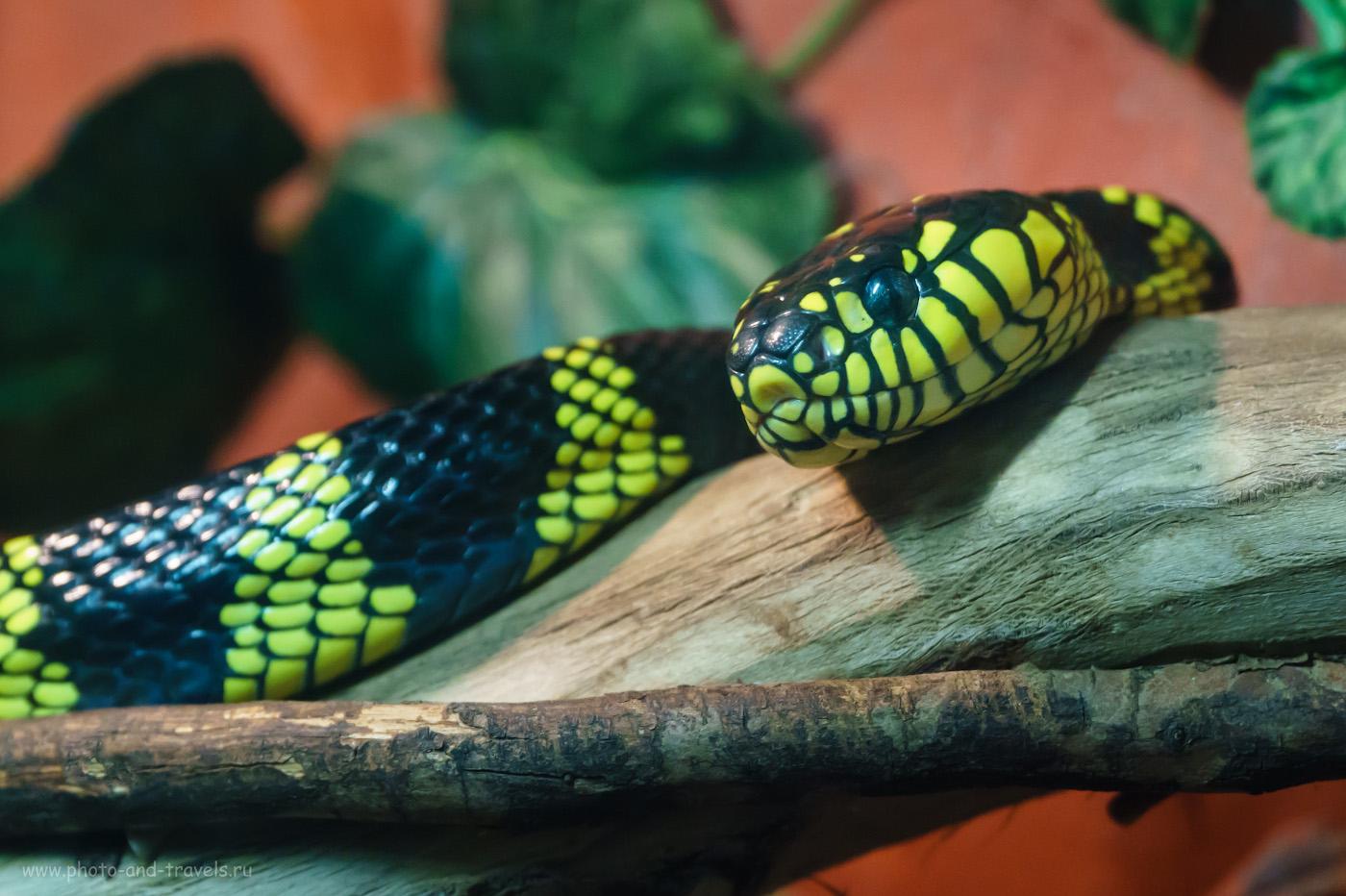 Фото 14. Фотоохота на змей с помощью тревел-зума Sony 18-105mm f/4, установленного на тушке Sony A6000. Снято без вспышки. Параметры съемки: 1/100, +0.7, 3200, 77.