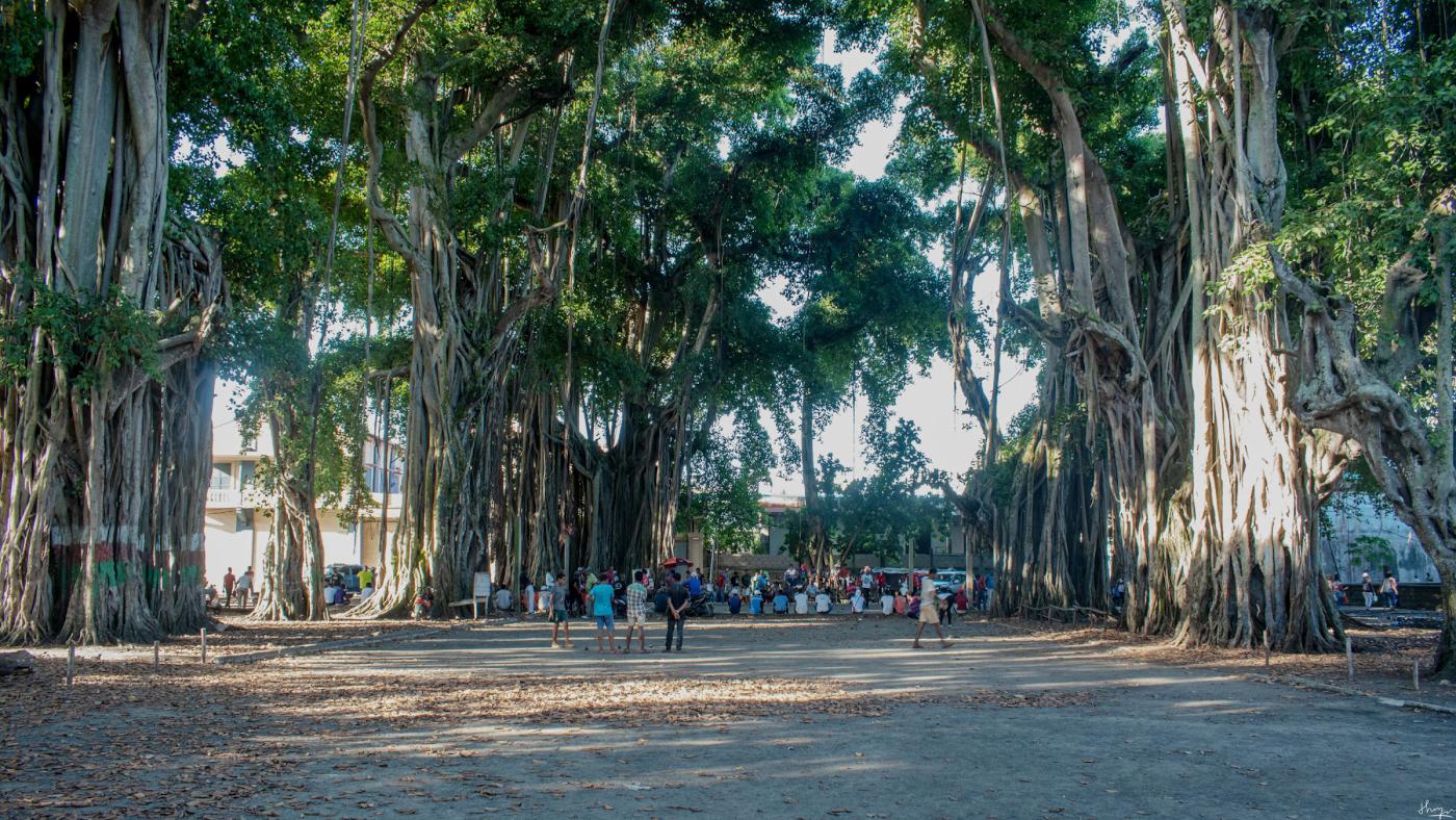 Фото 22. А не хотите ли съездить на Мадагаскар? Снято на Nikon D5600 КИТ 18-55 VR AF-P.