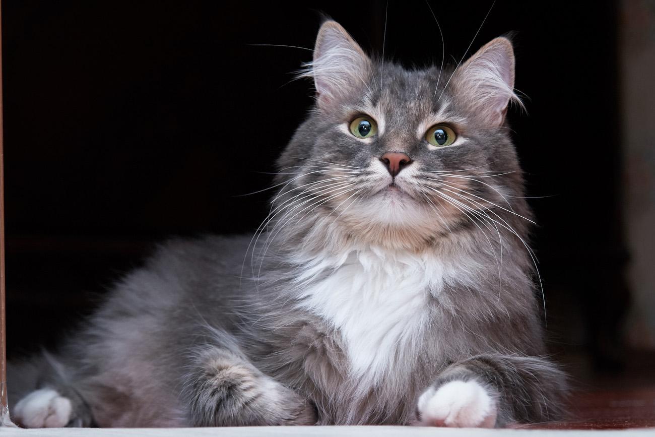 Съемка кошек на Сони.