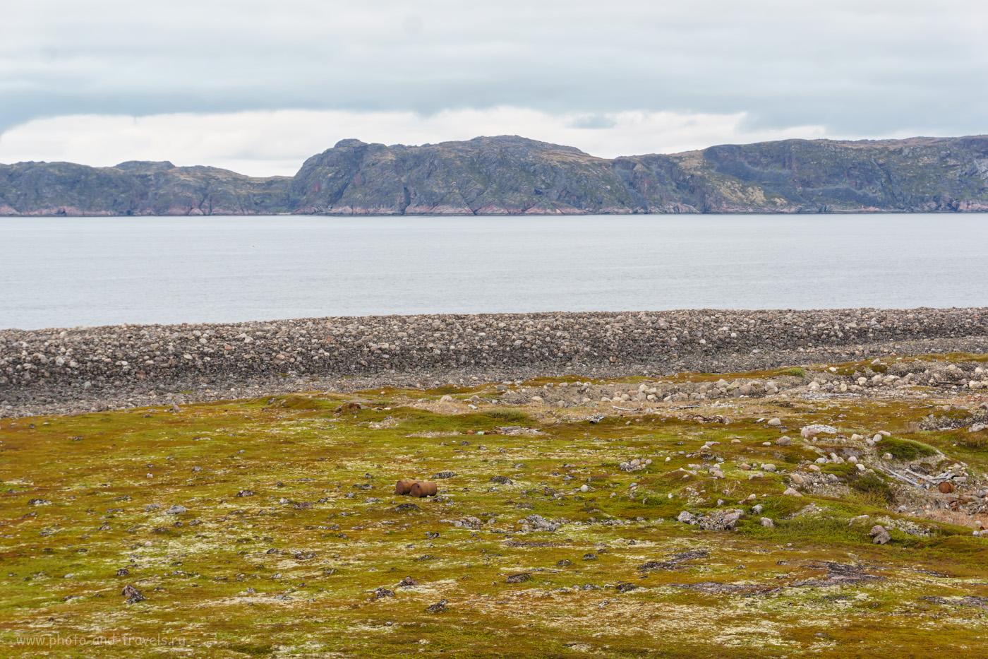 Фотография 15. Фьорды Териберской губы на Кольском полуострове. Поездка из Мурманска на один день.