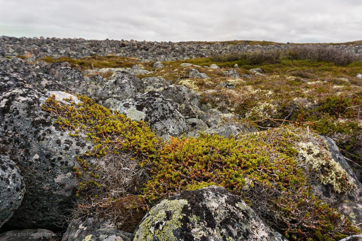 Фотография 20. Каменистая тундра на берегу Северного Ледовитого океана.