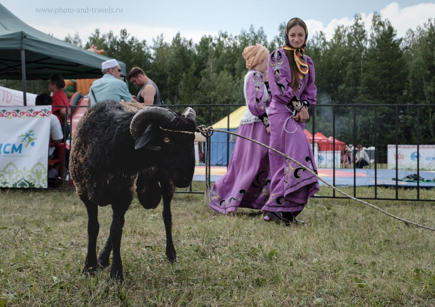 Фото 2. Баран на переднем плане уравновешивается девушкой на заднем. Правило третей в фотографии с уравновешенным задним планом. 1/280, +0.33, 6.4, 200, 24.