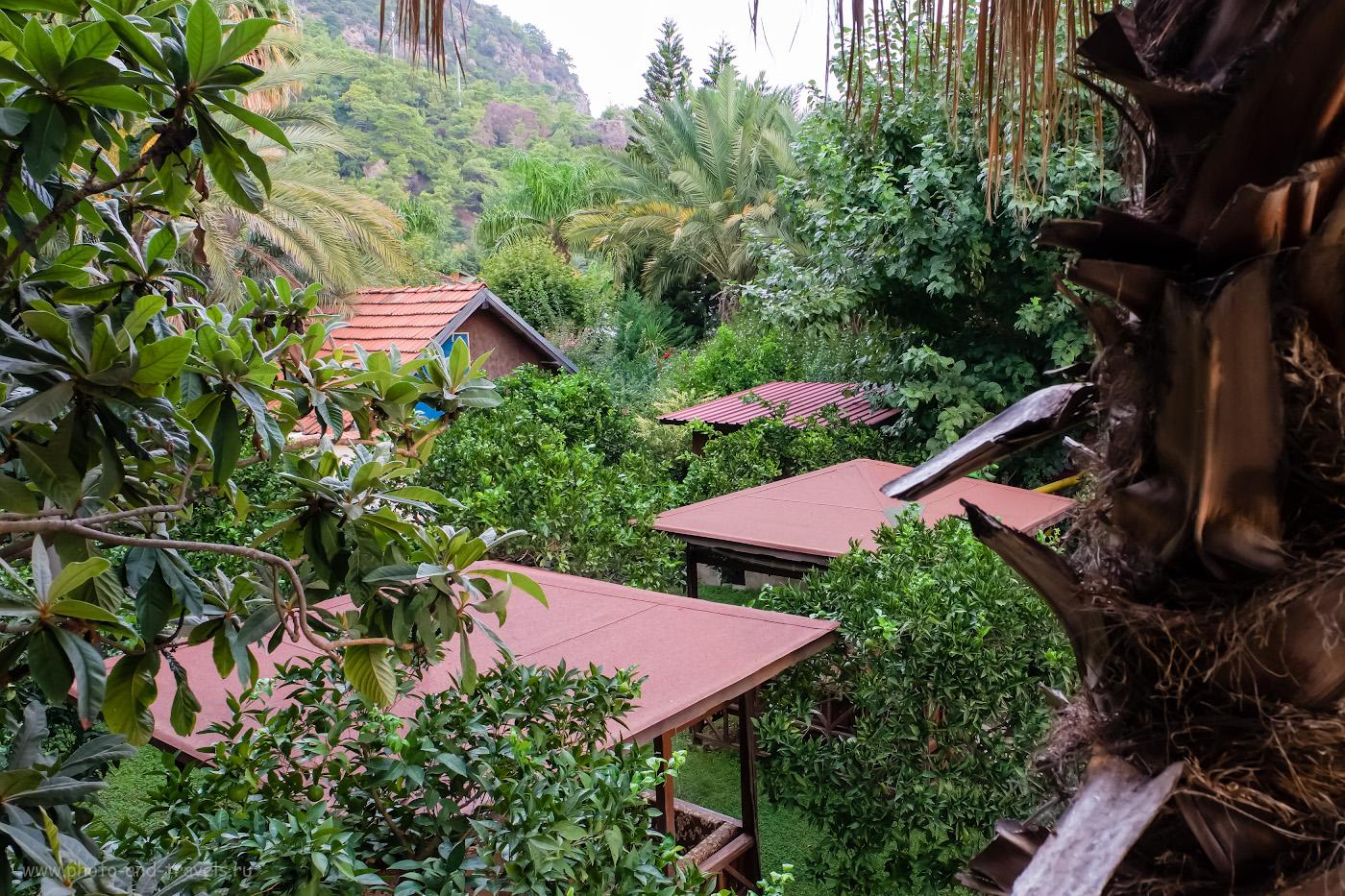 Фотография 21. Так выглядит территория отеля в Чиралы, где мы провели 10 прекрасных дней отпуска. Представляете, как сыну нравилось гулять в этом «лесу»? Стоит ли ехать отдыхать в Кемер? 1/100, 8.0, 2500, -0.33, 16.