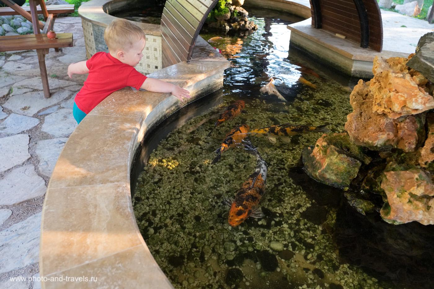 11. Золотые рыбки в бассейне нашей гостиницы. 1/250, 2.8, 2000, -0.33, 18.