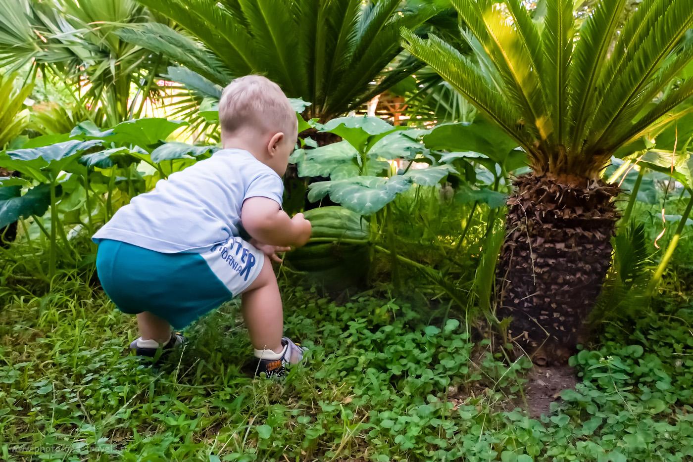 Фотография 10. Сын впервые увидел, как растет тыква. Отзыв об отдыхе в Турции самостоятельно. 1/240, 8.0, 6400, 16.