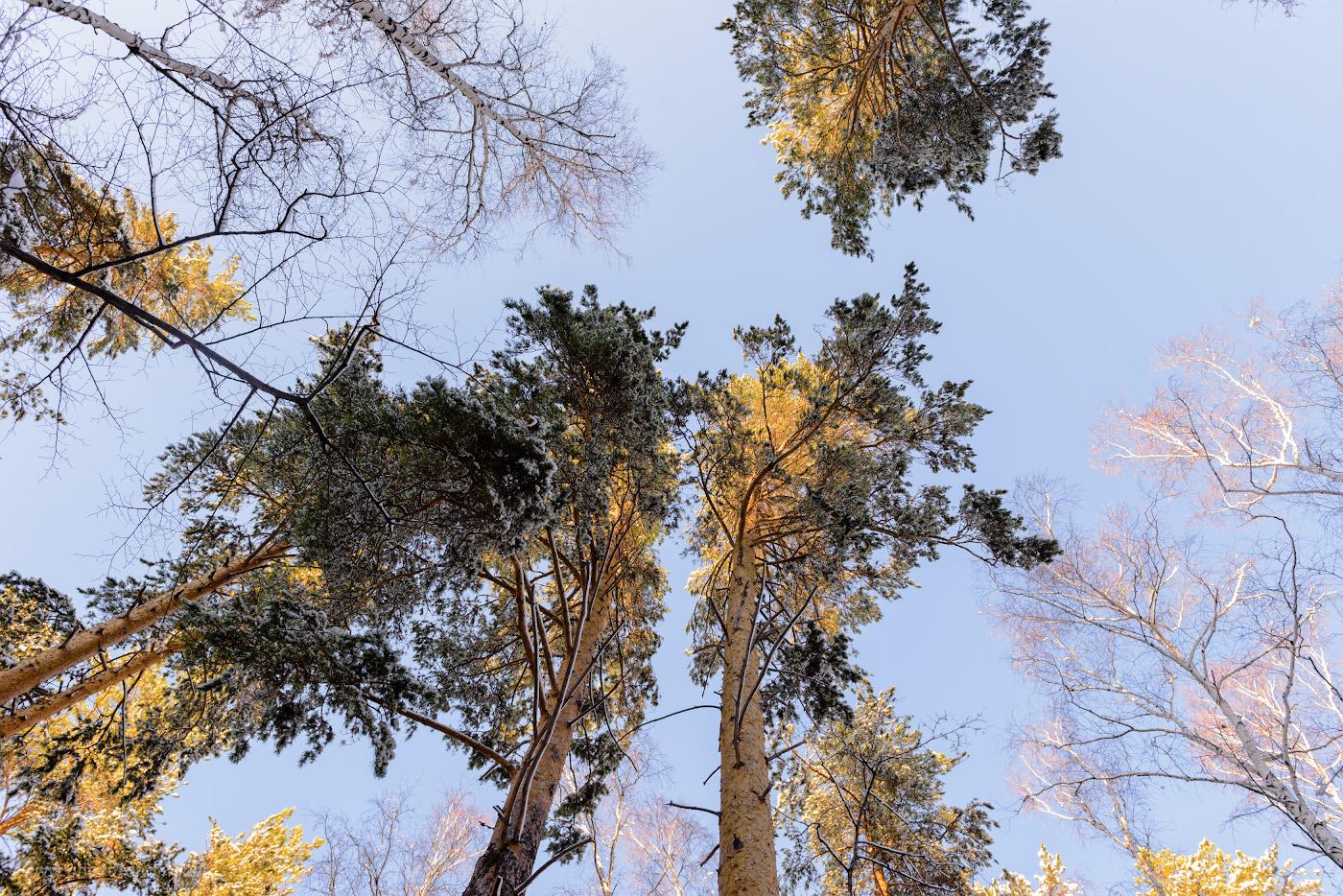 21. Плох тот фотограф, кто сходил в лес и не снял вершины деревьев.
