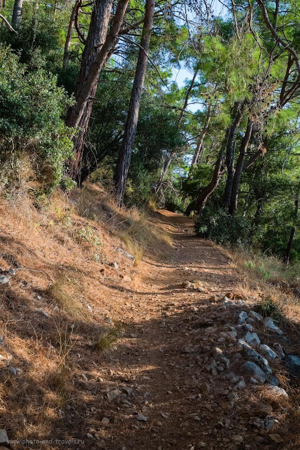Снимок 9. Хвойный лес на пути к маяку. Чем заняться на отдыхе в Турции? Отправляйтесь на пешую прогулку. 1/200, 9.0, 640, -0.67, 34.