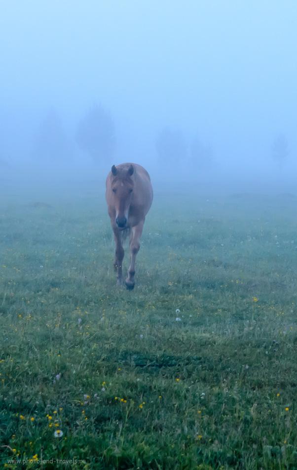 """18. Грустная лошадь в тумане на поляне возле хутора Отнурок. Отдых в горах Башкирии. База """"Малиновка"""".1/80, 5.6, 800, 48."""