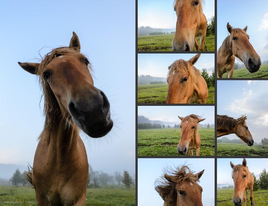 """26. Неординарная фотосессия с веселой лошадью около базы отдыха """"Малиновка"""" в окрестностях города Белорецк. Путешествие по Башкирии на машине."""