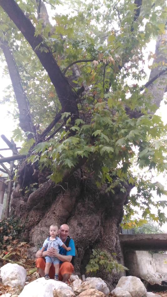 22. Как мы искали старинное дерево в Кемере. Снято на смартфон.