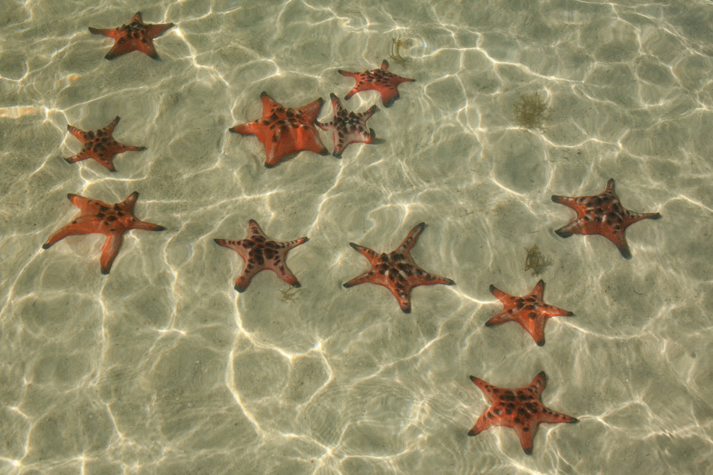 19. Морские звёзды, давшие название пляжу BaiRach Vem (Starfish Beach). 1/50, 18.0, 100, 80.