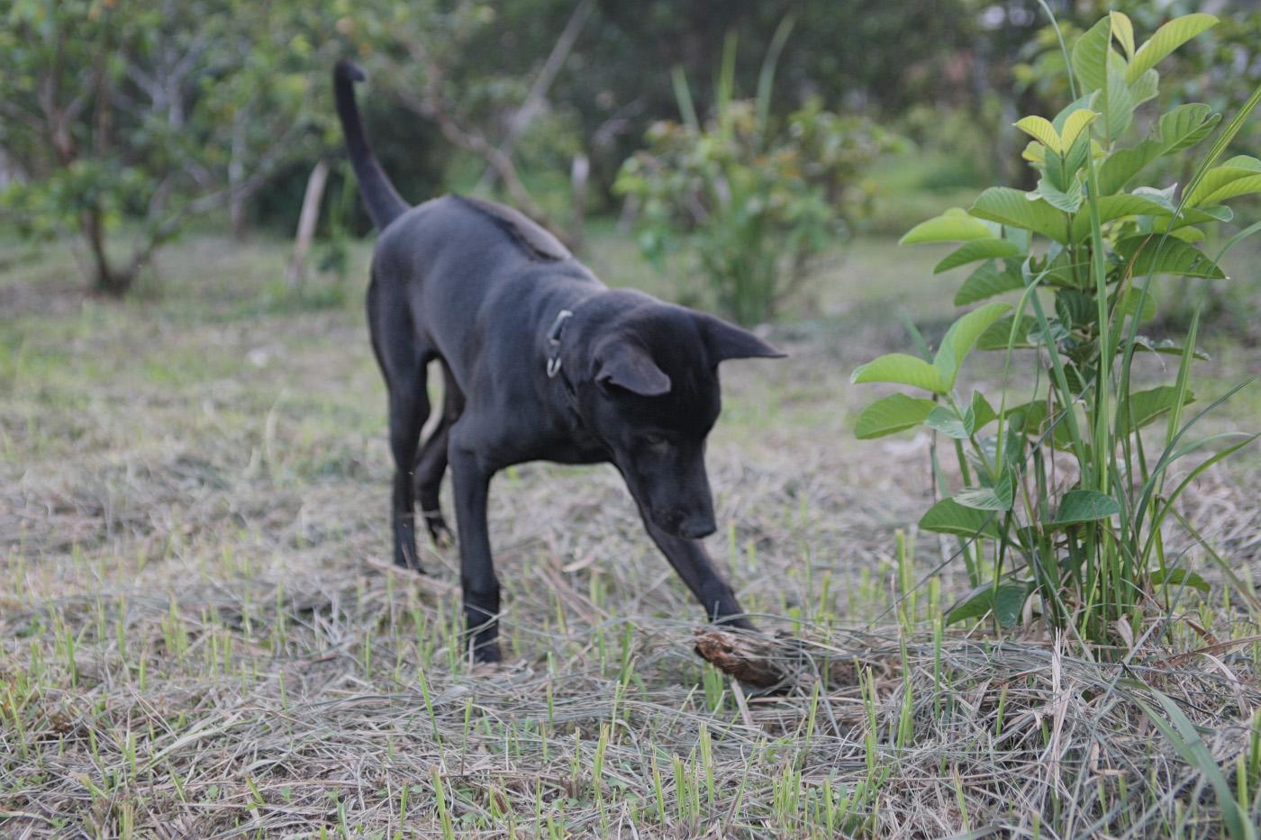 33. Так выглядит необычная порода собак риджбек с гребнем на спине. 1/100, 4.0, 400, 48.