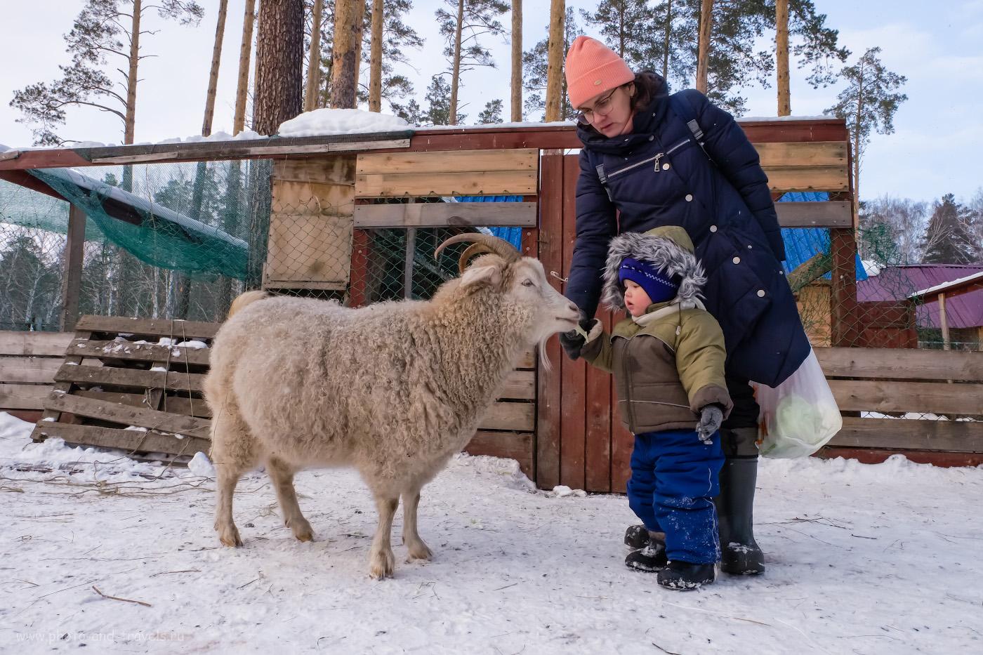 17. Теперь здесь есть и другие животные. Например, можно покормить козочек. 1/200, 2000, f/13, -0.33. 16.