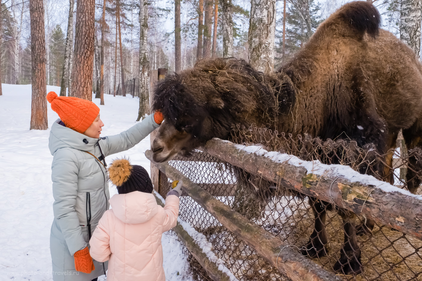 18. По словам хозяина фермы, скоро этому верблюду привезут подругу. Её купили в хозяйстве в Астраханской области. 1/100, 13.0, 3200, 27.