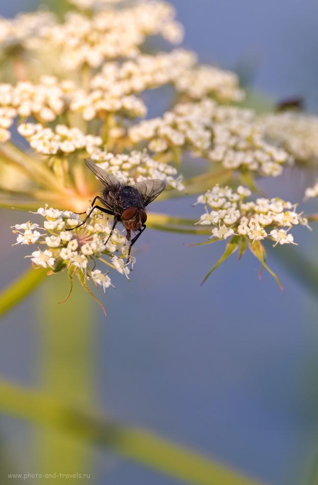 16. С помощью телевика можно снимать крупные планы (но не настоящее макро) с насекомыми, цветами и другими объектами. 1/500, 5.6, 200, 200.