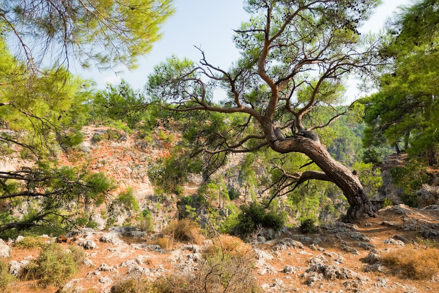 Фото 17. Изучаем природу Турции во время самостоятельных экскурсий. 1/500, 2.8, 200, -0.33, 19.