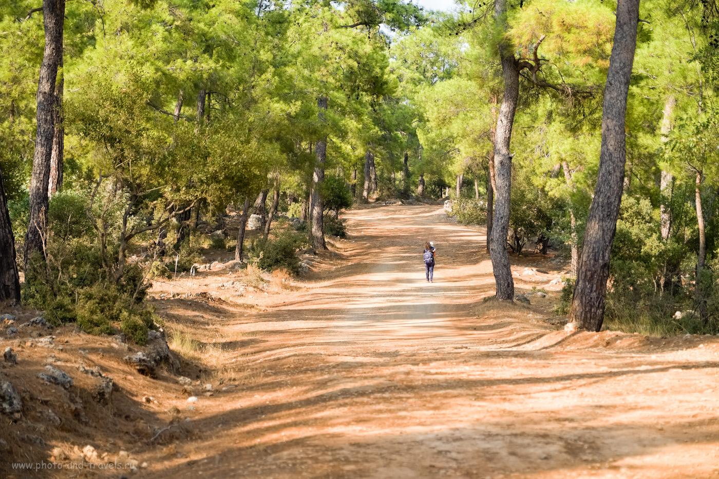 20. Не все экскурсанты готовы часами по турецким лесам. 1/300, 2.8, 200, +0.33, 55.